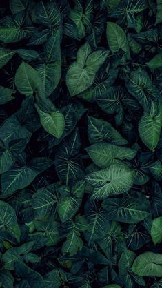 Nature Iphone Wallpaper Ideas : Nature wallpaper iPhone