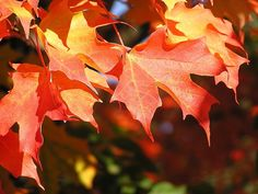 Three Fall Promotions Worth Trying