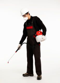 if you want to recieve best pest control services in abu dhabi to get rid of pests,call mazaya company in abu dhabi quickly we have many services in pest control in abu dhabi Best Pest Control, Pest Control Services, Rid Of Bed Bugs, Insect Pest, Abu Dhabi, Visit Website, Confident, Insects, Community