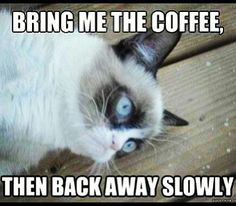 Grumpy cat needs coffee