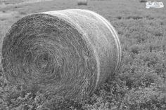 "Day 250 of 365 ""Midwest Living: Alfalfa Bales In An Open Field""  www.thefotoco.com www.facebook.com/thefotoco www.instagram.com/thefotoco www.pinterest.com/thefotoco  #thefotoco #365dayproject #photoglife #siouxfalls #southdakota #sodak #hifromsd #midwest #siouxfallsphotographer #southdakotaphotographer #alfalfa #bales #field #outdoors #farm #midwest #countryliving © The Foto Company, LLC"