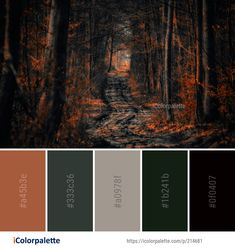 Color Palette Ideas from Forest Darkness Light Image Dark Color Palette, Color Palate, Couleur Html, Fall Color Schemes, Forest Color, Colorbox, Aesthetic Colors, Colour Board, Color Stories