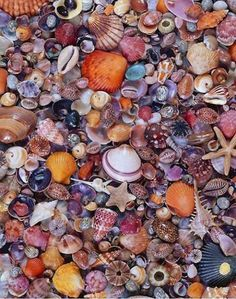 Thousands of exotic shells line the beach of Sanibel Island, Florida.USA.