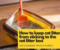 How to keep litter from sticking to box? I know this question might flummox not only you but also many other cat lovers. Best Cat Litter, Litter Box, Cat Lovers, Life Hacks, Floor, This Or That Questions, Cats, Check, Sandbox