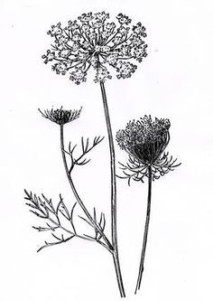 queen anne's lace tattoo arm - Google Search