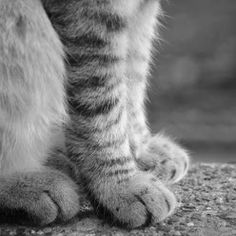 #Cats #Photography