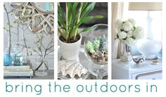 @Centsational Girl 's creative & beautiful ideas for bringing the outdoors into your home décor. Via MyColortopia.com