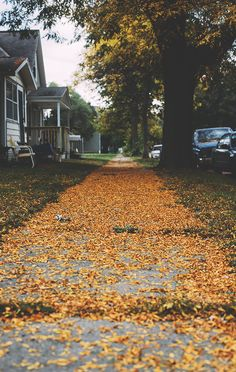 Find images and videos about autumn, fall and leaves on We Heart It - the app to get lost in what you love. Theme Halloween, Fall Halloween, Autumn Cozy, Fall Winter, Autumn Aesthetic, Les Sentiments, Happy Fall Y'all, Best Seasons, To Infinity And Beyond