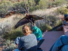 Águia tenta arrastar criança em parque de vida selvagem