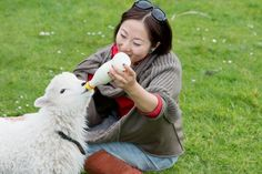A True experience of New Zealand sheep shearing at 'The point sheep Shearing Show. in Kaikoura, meet the dogs and sheep on this third generation working farm Sheep Shearing, Kiwi, New Zealand, Opportunity, Action, Tours, Activities, Animals, Group Action