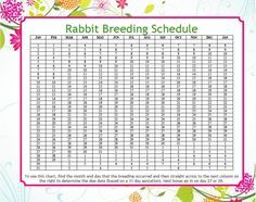 Rabbit Gestation Calender