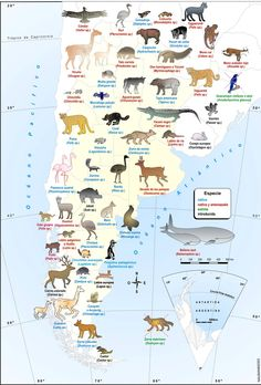 This is more than Buenos Aires, but I include it because I doubt that many people know about the variety of wildlife in Argentina. Spanish Teacher, Spanish Classroom, Teaching Spanish, Spanish Speaking Countries, Country Maps, South America Travel, How To Speak Spanish, Fauna, Education