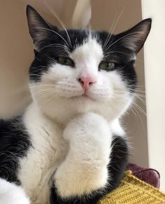 Animals Discover Cute Cats And Kittens Kittens Cutest I Love Cats Crazy Cats Kitty Cats Pet Cats Weird Cats Lady Kitty Ragdoll Cats Funny Animal Memes, Funny Animal Pictures, Cute Funny Animals, Cat Memes, Funny Cats, Squirrel Memes, Funny Memes, Images Of Cute Cats, Animal Pics