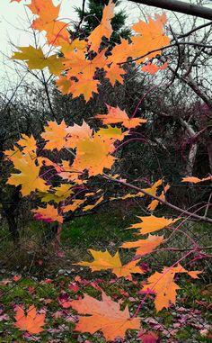 Barwy jesiennych liści.
