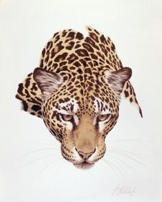 Cat Portraits by Guy Coheleach - Guy Coheleach's Animal Art Big Cats Art, Cat Art, Animal Paintings, Animal Drawings, Pencil Drawings, Tier Fotos, African Animals, Cat Drawing, Wildlife Art