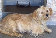 SAFE --- A4806094 I am a friendly 2 yr old female tan Terrier mix. I came to the shelter as a stray on March 6. available 3/10/15  Baldwin Park shelter https://www.facebook.com/photo.php?fbid=938346169510554&set=pb.100000055391837.-2207520000.1426428067.&type=3&theater
