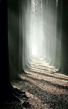 Optrekkende mist in het bos met zonlicht.