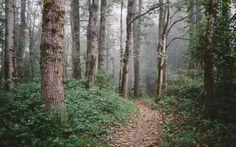 Walk Alone Into Autumn (John Westrock).