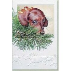 Doxie in a Pine Tree
