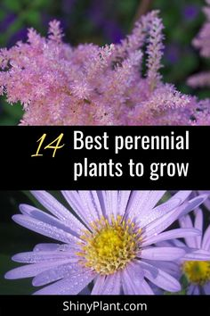 Here I have listed 26 best perennial plant that you can grow in your garden. These attractive flowering plant give different look to your garden plus they don't need much care. #perennial #shade #flower