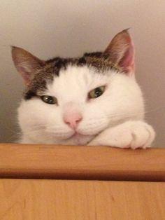 My Bob Cat!!