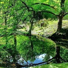 Reflection of trees on water #reflection #photography