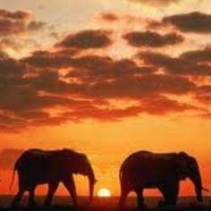 African Sunset Safari