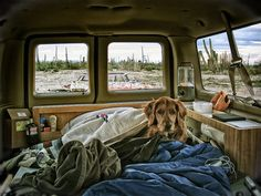 Campervan dog