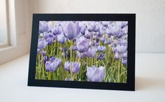 Purple tulips by Kristina on Etsy