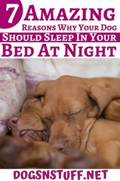 Here are the top benefits of letting your dog sleep with you in the night! Feeling Scared, How Are You Feeling, Feeling Of Loneliness, Dog Rules, Dog Hacks, Sleeping Dogs, Go To Sleep, Dog Behavior, Dog Training Tips