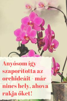 Container Gardening, Garden, Orchids, Bonsai, Plants