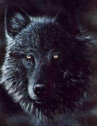 Resultado de imagem para Black wolf