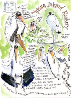 From the nature journals of Pam Johnson Brickell over at South Carolina Low Country Nature Journaling.