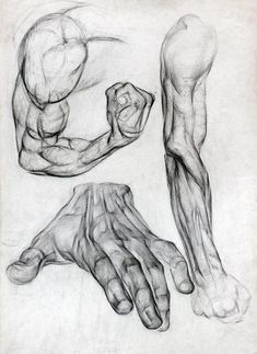 Exceptional Drawing The Human Figure Ideas. Staggering Drawing The Human Figure Ideas. Arte Com Grey's Anatomy, Arm Anatomy, Human Anatomy Drawing, Body Anatomy, Human Body Drawing, Anatomy Study, Male Figure Drawing, Figure Drawing Reference, Anatomy Reference
