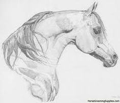 horses drawings - Google Search