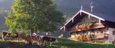 Holidays at the Altenburger Hof in Brannenburg in the Rosenheimer Land, Oberbayern - apartments, farm holidays