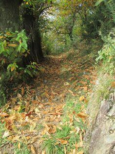 Raccontare un paese: sentieri in autunno