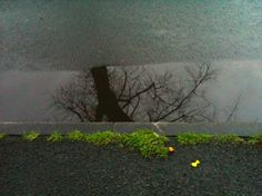 tree puddle; aweosme,  right?