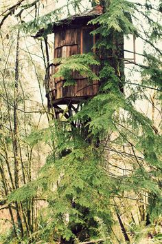 Treehouse Point in Issaquah, WA.Submitted byCatherine Johnson.    View more at Fox in the Pine.