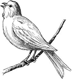 The Birds ClipArt collection offers ClipArt illustrations of birds and bird anatomy distributed amongst 16 galleries. Every ClipArt il. Bird Line Drawing, Card Drawing, Black And White Birds, Black And White Drawing, Engraving Illustration, Bird Illustration, Antique Bird Cages, Bird Clipart, Vintage Drawing