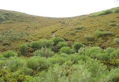 Asaja demanda mayor apoyo presupuestario para los montes que favorezcan el pastoreo y prevención de incendios http://www.revcyl.com/web/index.php/medio-ambiente/item/8871-asaja-demanda-m