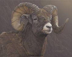 Rocky Mountaineer by Daniel Smith