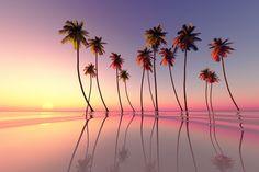 みんなが大好きな場所、ハワイ。そこで見れるピンクのサンセットが綺麗すぎると噂に。常に綺麗な海だが、日落ちの時に魅せるその美しさは息を飲むこと間違いなし!