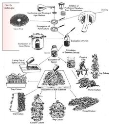 Overview of Mushroom Cultivation chart