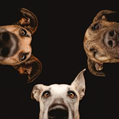 Creative photo ideas for August: 04 Shoot your pets in creative ways