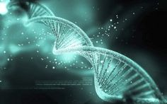 Only percent of human DNA is function, according to a new study. These findings suggest that majority of the human genome is so-called junk DNA. Human Dna, Human Genome, Human Embryo, Human Body, Art Adn, Dna Kunst, Dna Model Project, Kaleidoscope Art, Dna Drawing