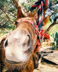 Strategos ya está creciendo. #Caballo #Horse #Oaxaca