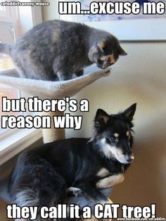 Uhh...excuse me. dog laying in the cat tree - Cat memes - kitty cat humor funny joke gato chat captions feline laugh
