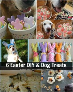 6 Easter DIY and Dog Treats + Tips for Dog Friendly Easter - Pets Diy Dog Treats, Homemade Dog Treats, Dog Treat Recipes, Cake Recipes, Pet Care Tips, Diy Stuffed Animals, Pet Gifts, Dog Friends, Fur Babies