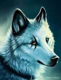 scored eye wolf
